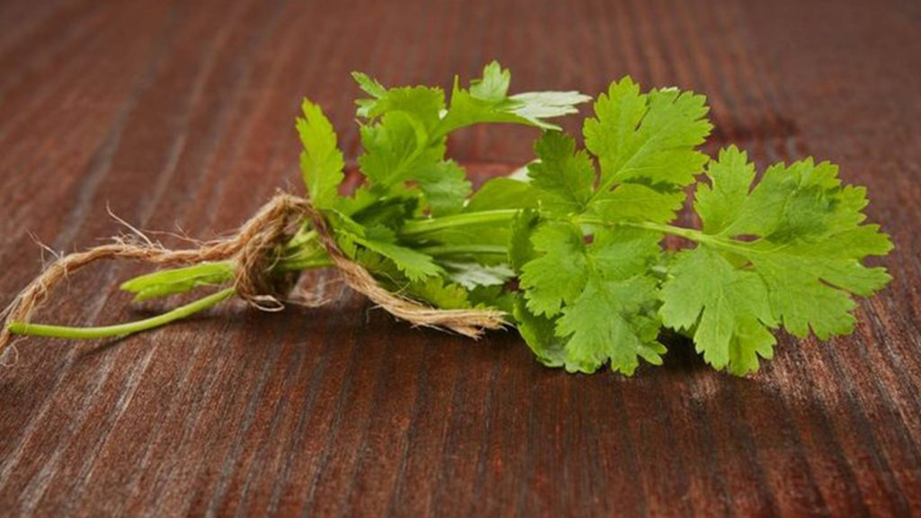 Healing Power of Herbs and Spices (Part 2) Cilantro and Black Pepper